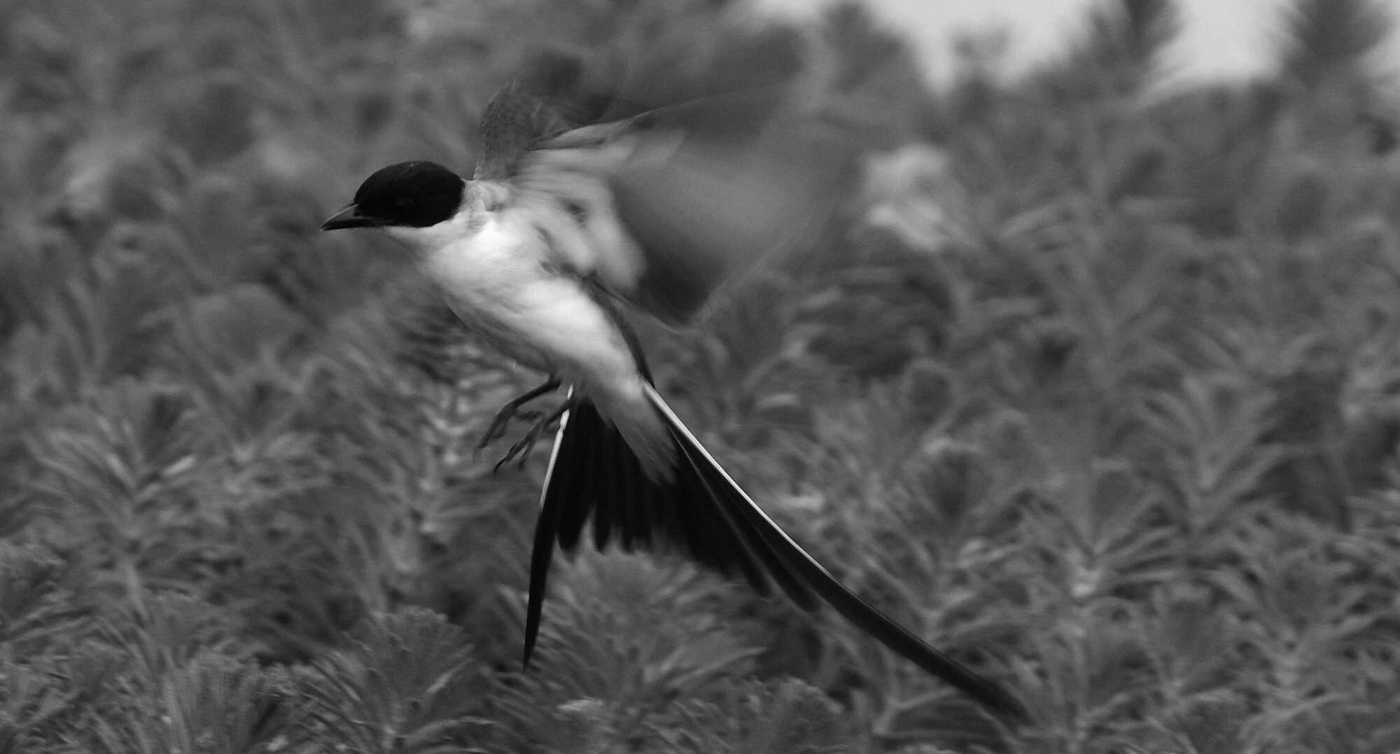 Diary-bird-flickr.jpg