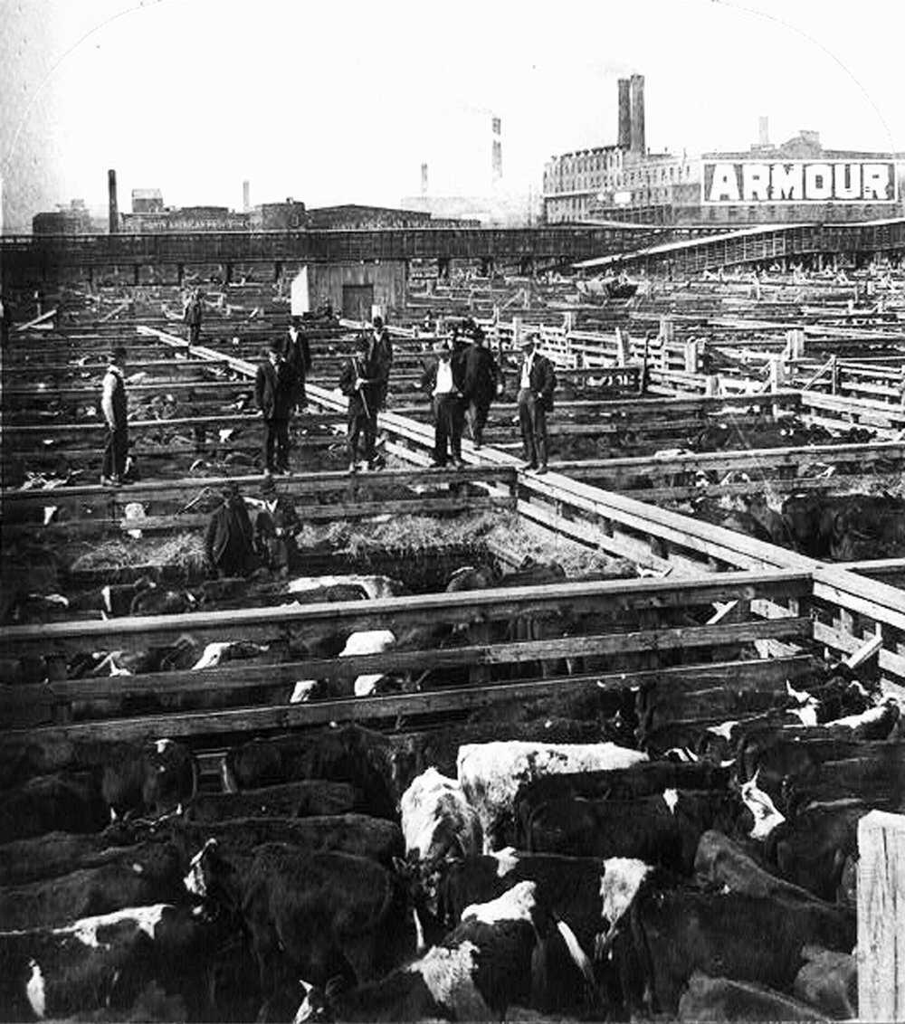 PoisonSquad-Book-Chicago_stockyards_cattle_pens_men_1909.jpg