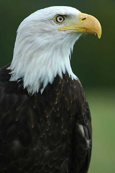 Earth Eagle 500.jpg