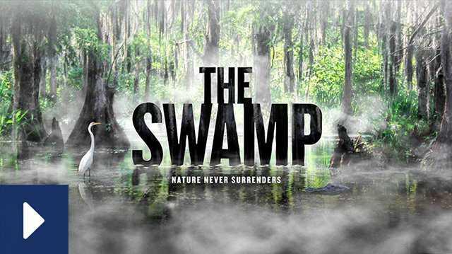Watch Film Swamp canonical.jpg