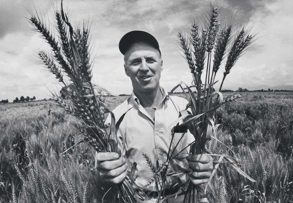 Borlaug-Article-3.jpg