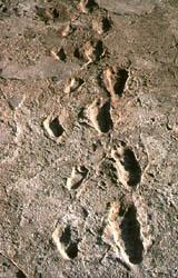 fossil human foot prints