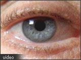 Closeup of the human eye.