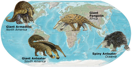Although living in different parts of the world, these mammals are closely similar, due to living in similar environments.