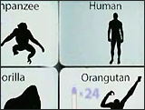 an analysis of the evolution theory proposed by charles darwin See video following in the footsteps of darwin and find out more about the ou's courses exploring the science behind his theory of evolution.