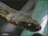 Image of a snake.