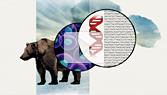 DNA Spells Evolution