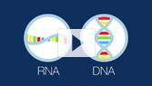 The RNA Enigma