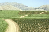 Photography: Down Persian Roads