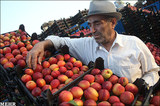 Business | Feeling the Pinch: Iran's Embattled Importers
