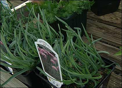Grow plants vegetables