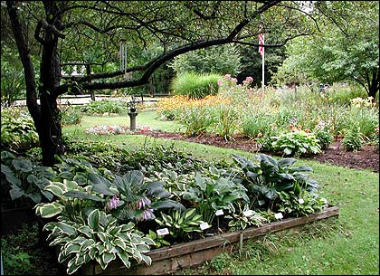 The Victory Garden Grow Primers Projects Lotsa Hostas Pbs