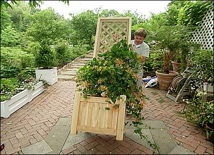 Planter box plants for Outdoor planter screen