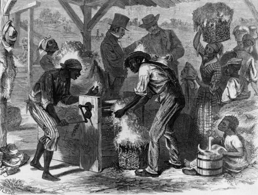 The Role Cotton Played In The S Economy  African American  First Cotton Gin From Harpers Weekly  Illustration Depicting Event  Of Some