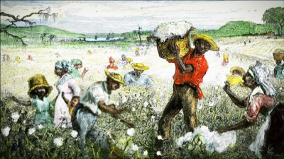 Cotton plantation illustration