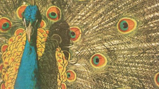 Living with a Peacock by Flannery O'Connor