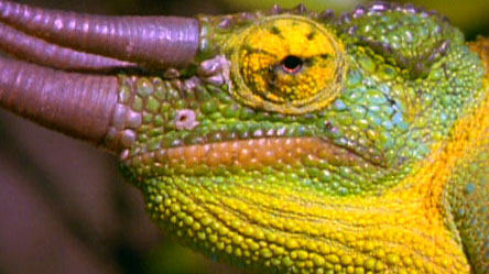 lizard essay Lizard in the world malaysia has several species of rubber trees that grows naturally in the region forming a major source of income for the people.