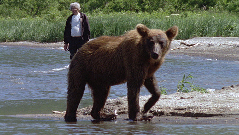 essay about bears