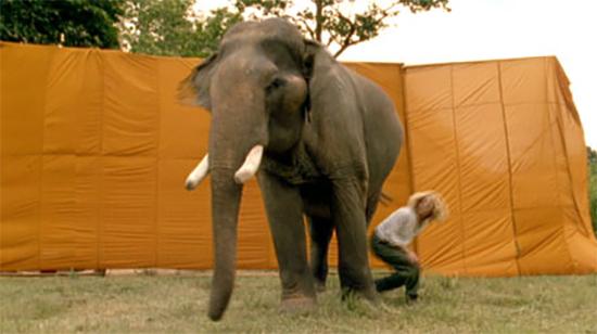 elephant essay in english