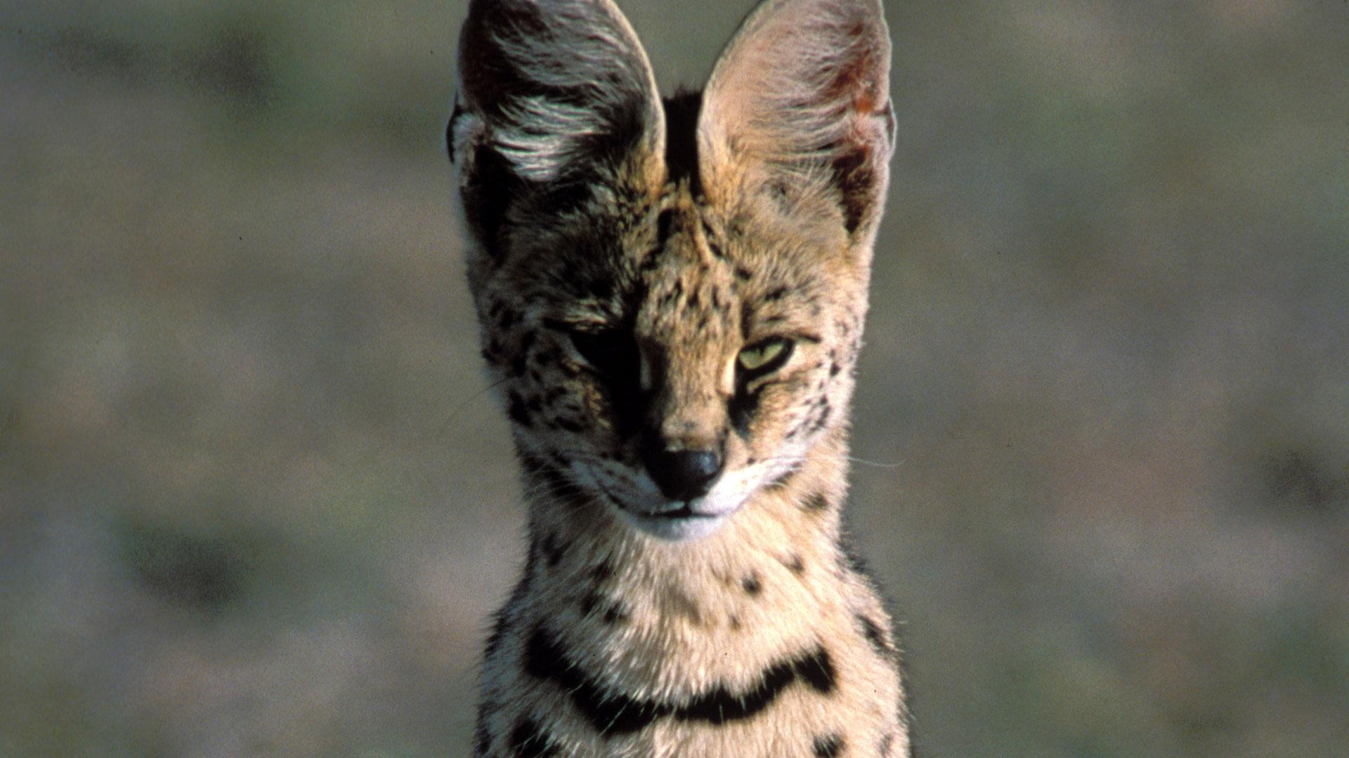 silent roar cat repellent reviews