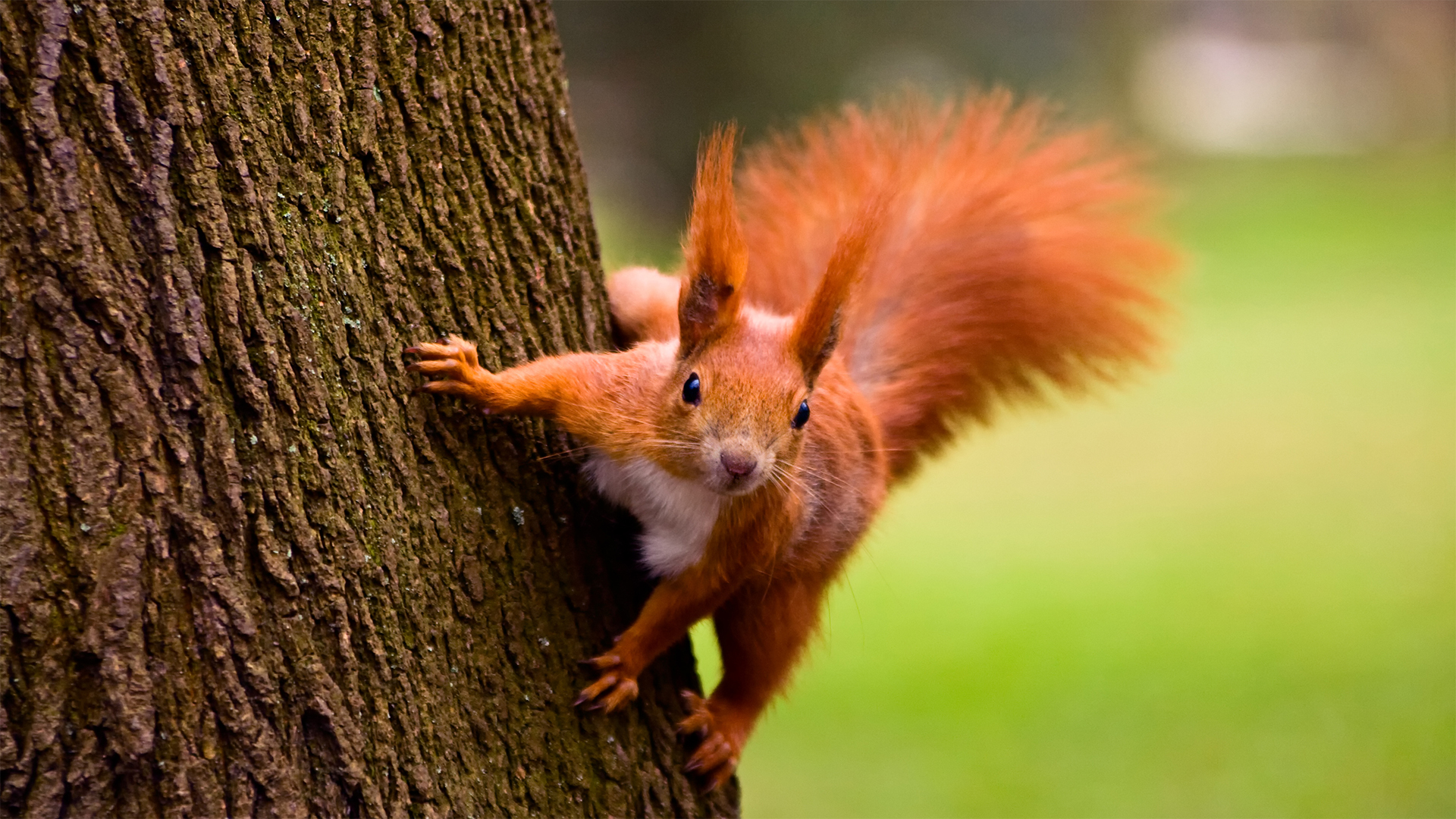 image from PBS program _Nature_ episode A Squirrel's Guide to Success, select to watch video