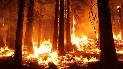 The Science of Predicting Fires