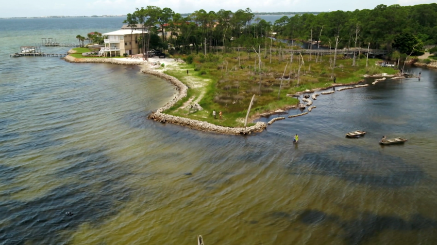 'Living shorelines' use oyster shells and marsh grass to reverse coastal erosion