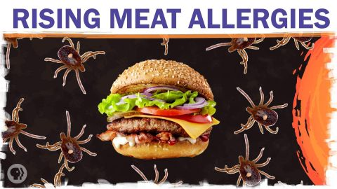 Could climate change make you allergic to meat?