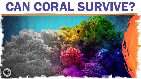Coral Reefs Are Dying. But They Don't Have To.