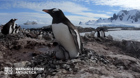 """Warnings from Antarctica"" teaches global lessons of climate change"