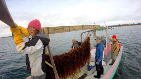 A new generation of ocean farmers are reducing pollution with seaweed