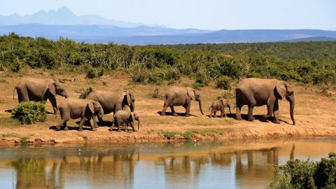 How are elephants and monkeys working to protect you from climate change?