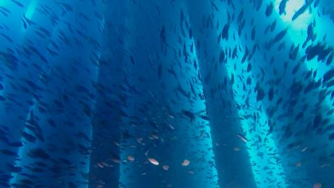 WATCH: The Dazzling Ocean Reefs Hidden Beneath Offshore Oil Rigs