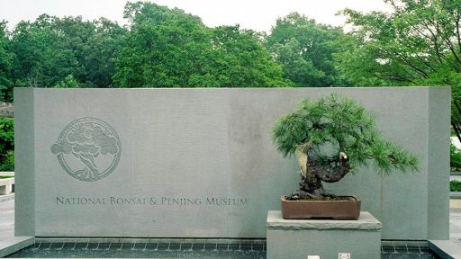 Centuries-old Bonsai Tree That Survived Atomic Bomb Gets Honored 70 Years Later – Secrets in the News: August 1 – 7, 2015