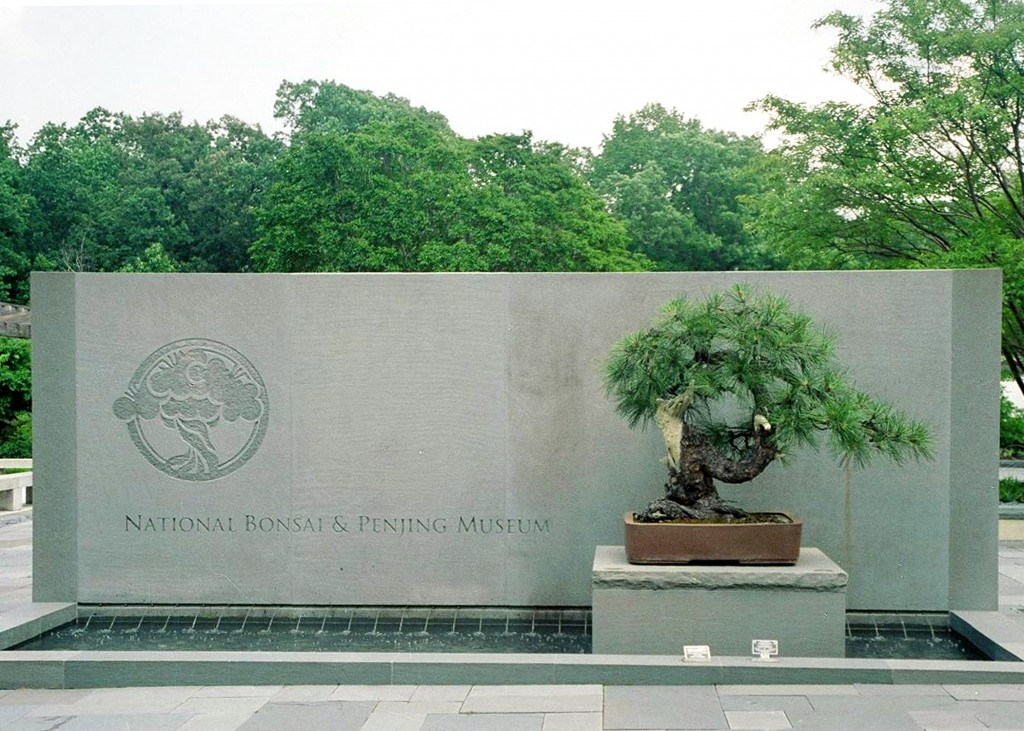 Centuries-old Bonsai Tree That Survived Atomic Bomb Gets Honored 70 Years Later - Secrets in the News: August 1 – 7, 2015 | News | Secrets of the Dead | PBS