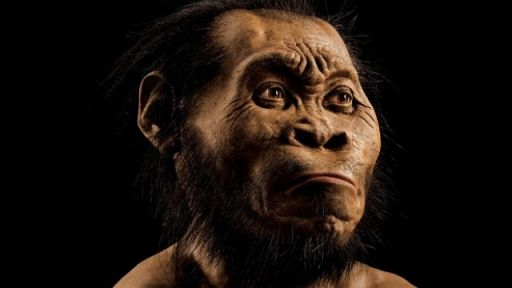 New Species of Human Discovered in South Africa – Secrets in the News: September 5 – 11, 2015