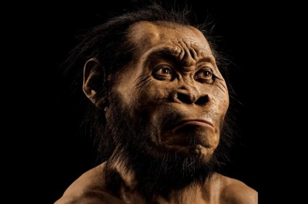A reconstruction of Homo naledi's head by paleoartist John Gurche, who spent some 700 hours recreating the head from bone scans. University of the Witwatersrand, National Geographic Society and the South African National Research Foundation.