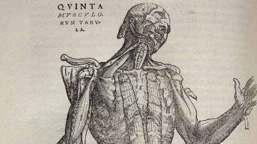 The Grisly Details of Early Anatomy Textbooks – Secrets in the News: October 24 – 30, 2015