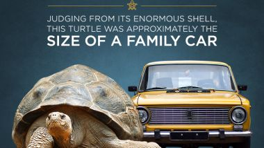 Infographic: A turtle the size of a car?