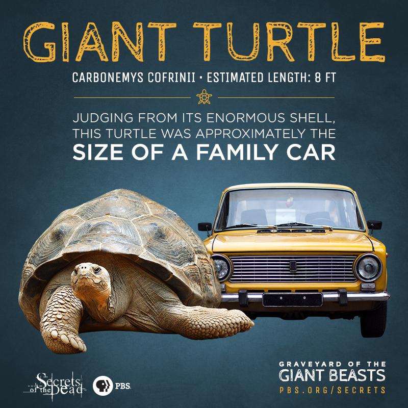 SOTD-Giant-Beasts-Info-Turtle