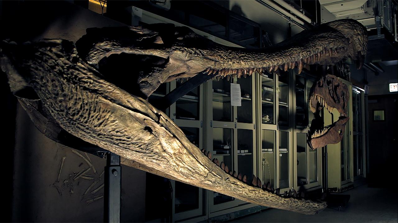titanoboa snake skeleton wwwpixsharkcom images