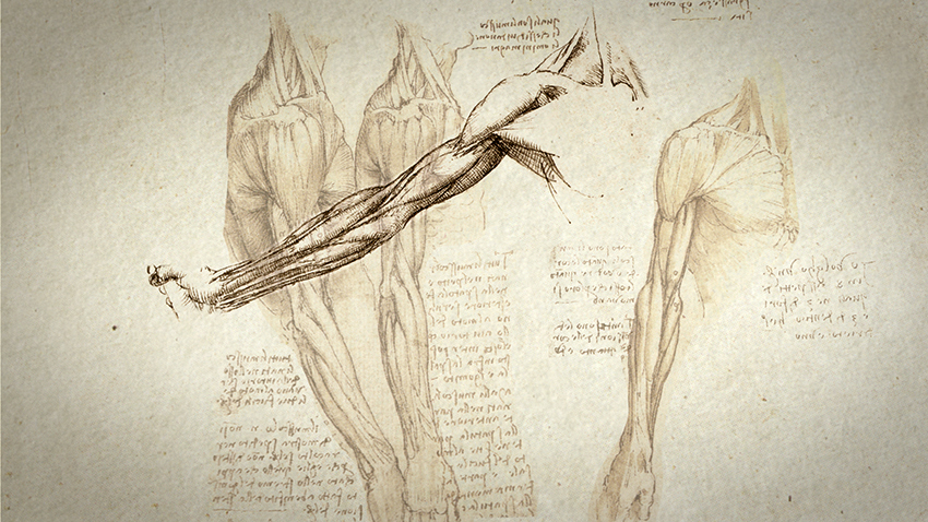 Leonardo da Vinci's anatomical drawing. Credit: Courtesy of GA&A Productions