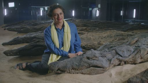 Clip |  Sacred Crocodile Mummies Reveal the Climate of Ancient Egypt