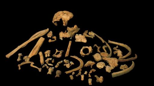 The World's Oldest Human DNA Found and More News Items for April