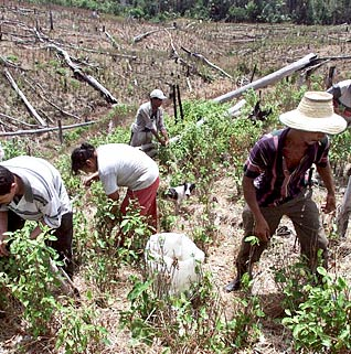 Campesinos and the Crop