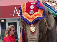 Wedding elephant